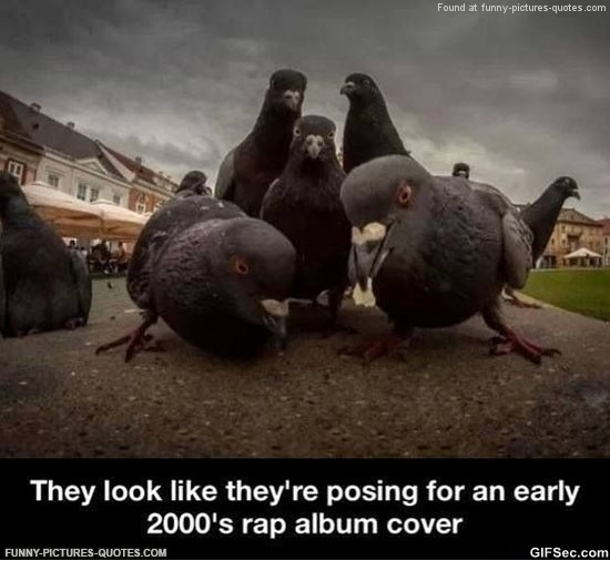 Pidgeons would make great rappers